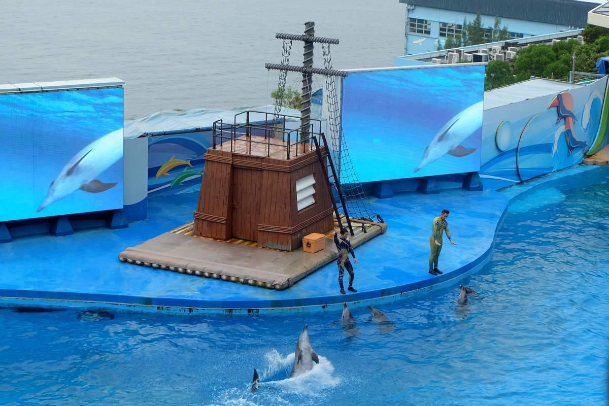 Ocean Wonders Dolphin Show