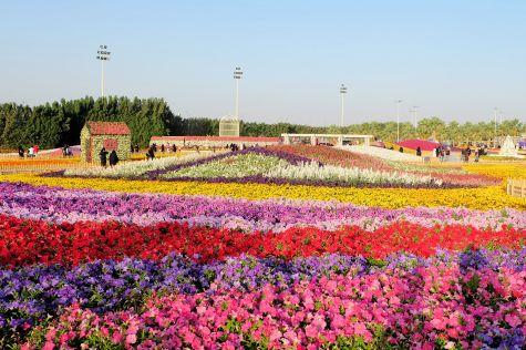 Flower Festival 2018-8