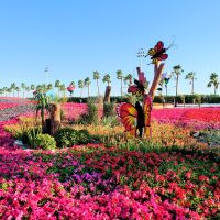 Top 9 Reasons Why You Should Visit Yanbu Flower Festival 2019