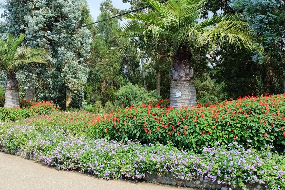Batumi Botanical Garden1