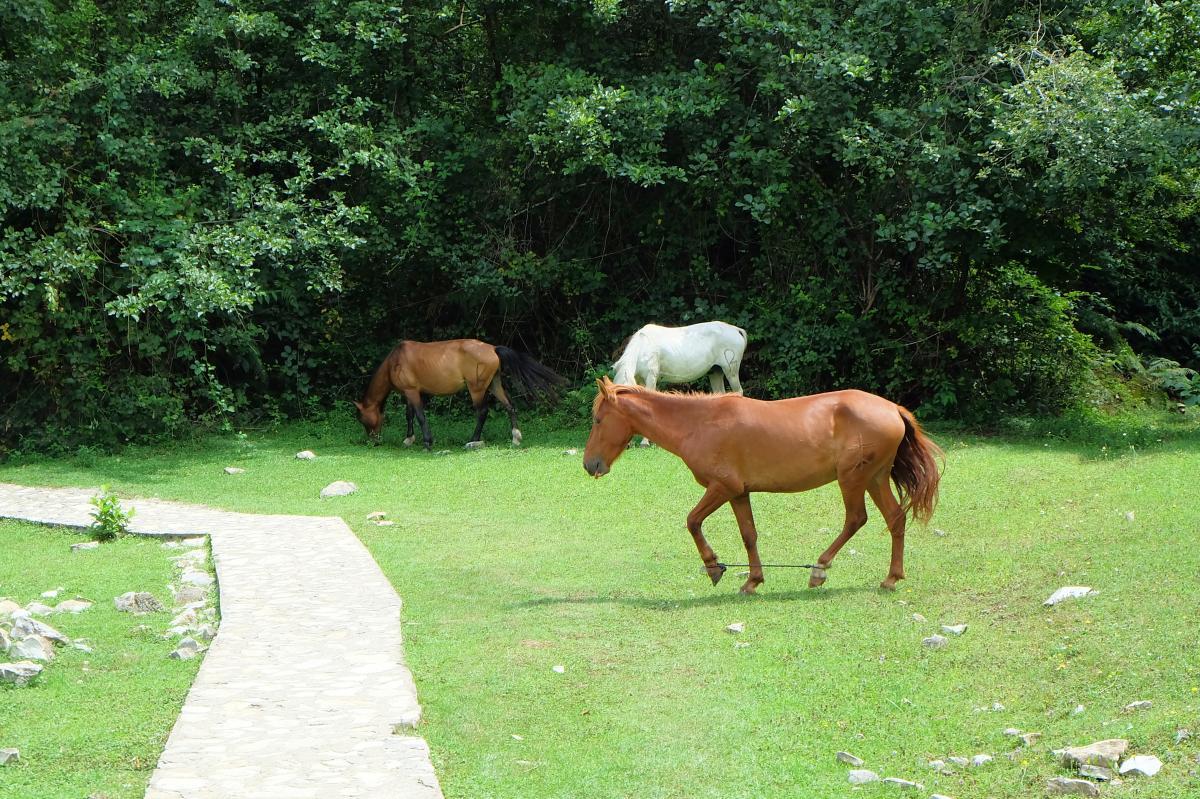 Okatse Canyon Horses